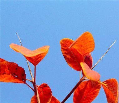 晚上做梦梦见黄色的树叶是怎么回事?