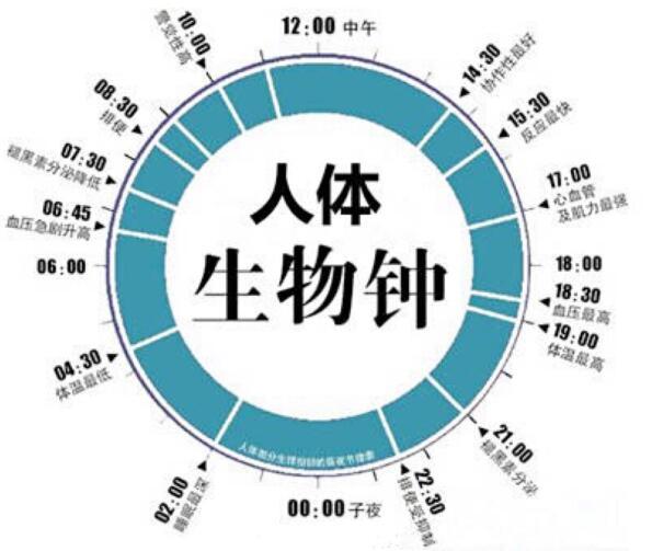 人体生物钟时刻表