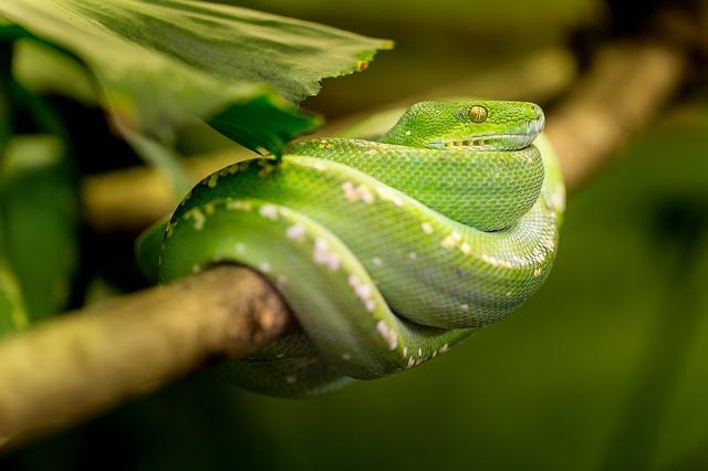 学生梦见蛇