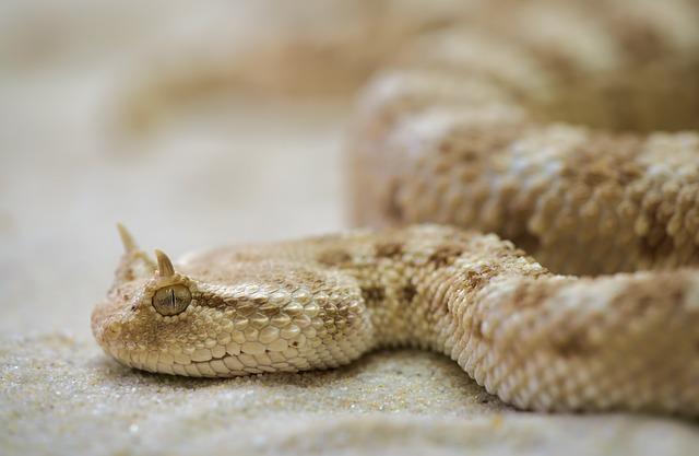 男人梦见蛇