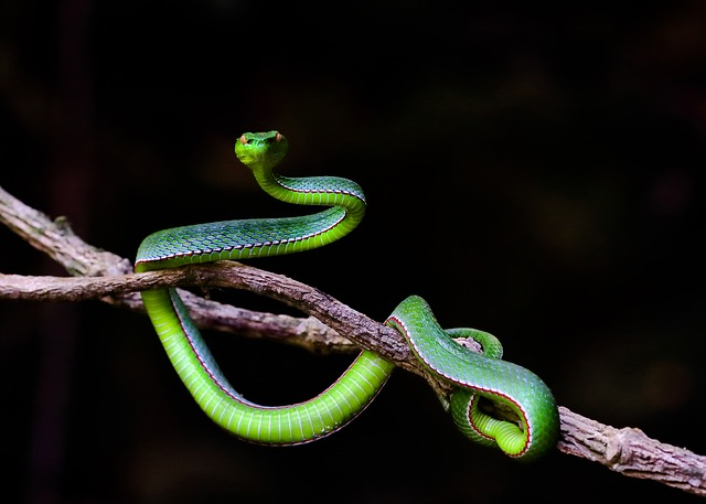 原版周公解梦梦见蛇