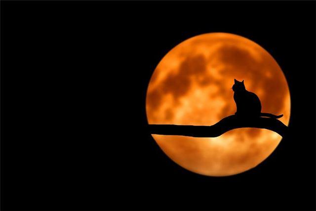 晚上做梦梦到猫预示着什么?而且是梦到漂亮的猫是怎么回事?