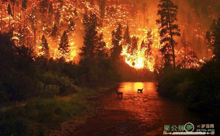 梦见大树被火烧