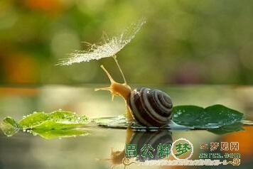 做梦梦见蜗牛